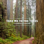 Celebrate the Work of the Save the Redwoods League with Take Me to the Trees
